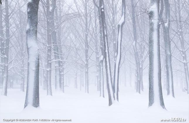 代々木公園の雪