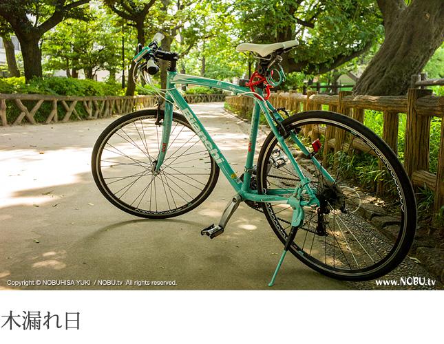 NOBU.tv : 碑文谷公園