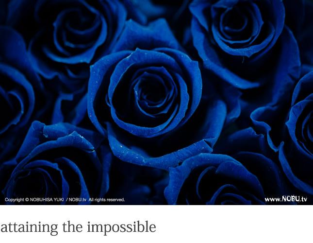 NOBU.tv : BLUE ROSE